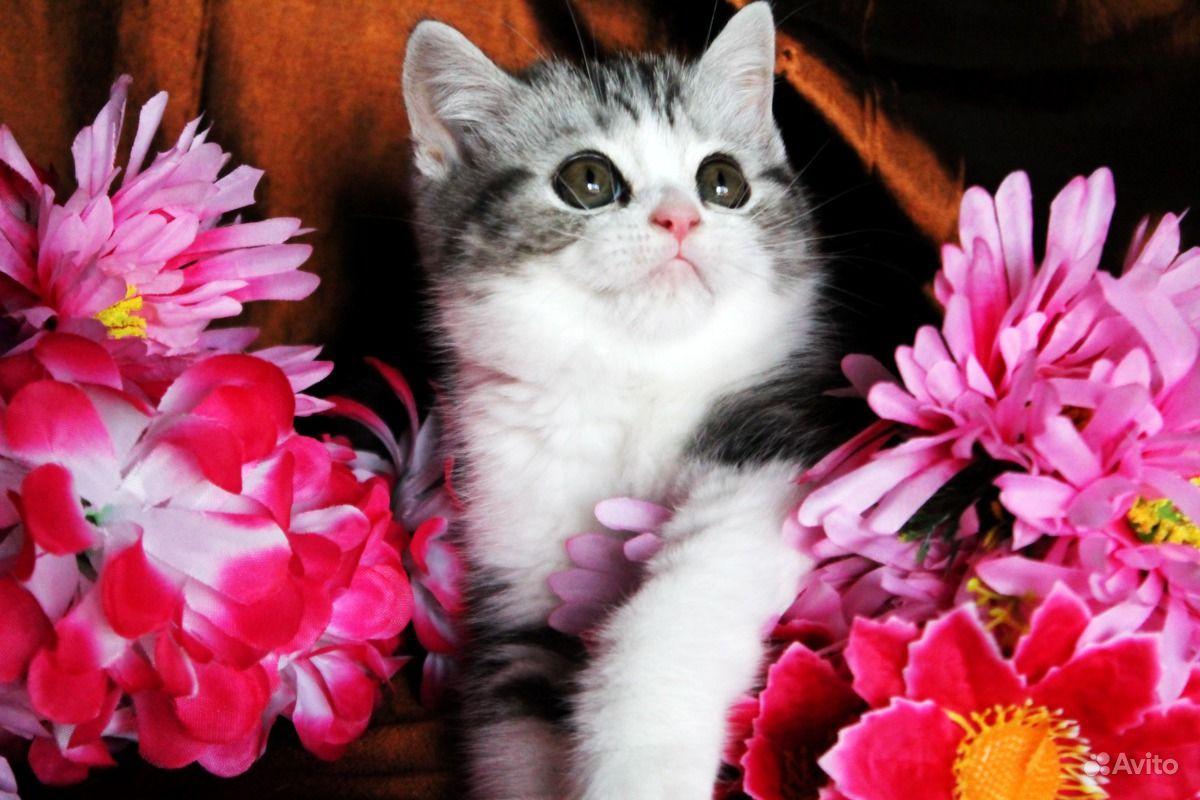 Яркий котик вискас с белым