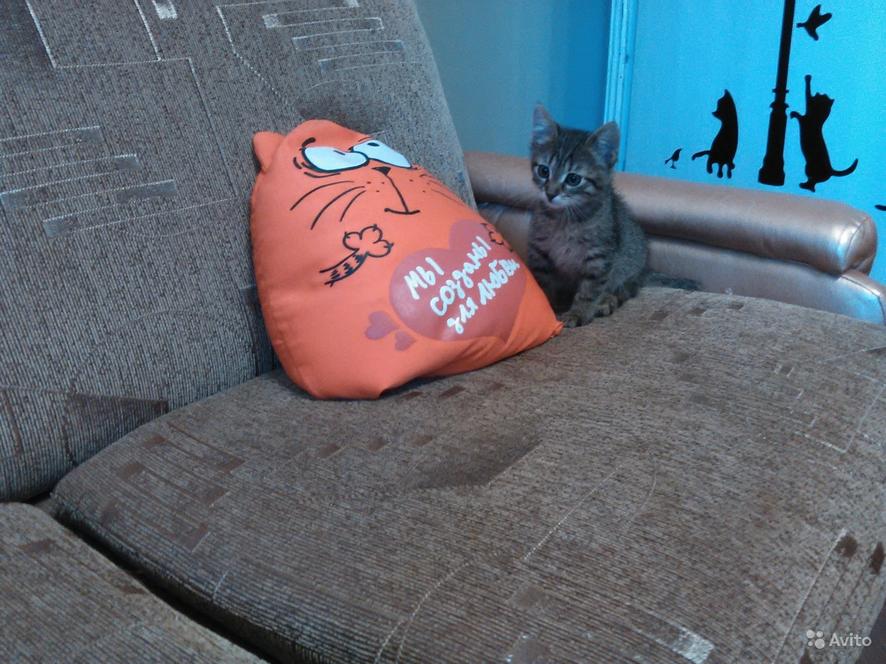 Авито курск котята в добрые руки