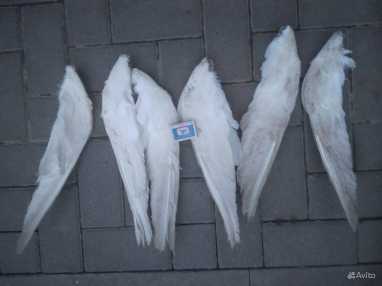 Крылья гусинные в Краснодаре - фотография № 1