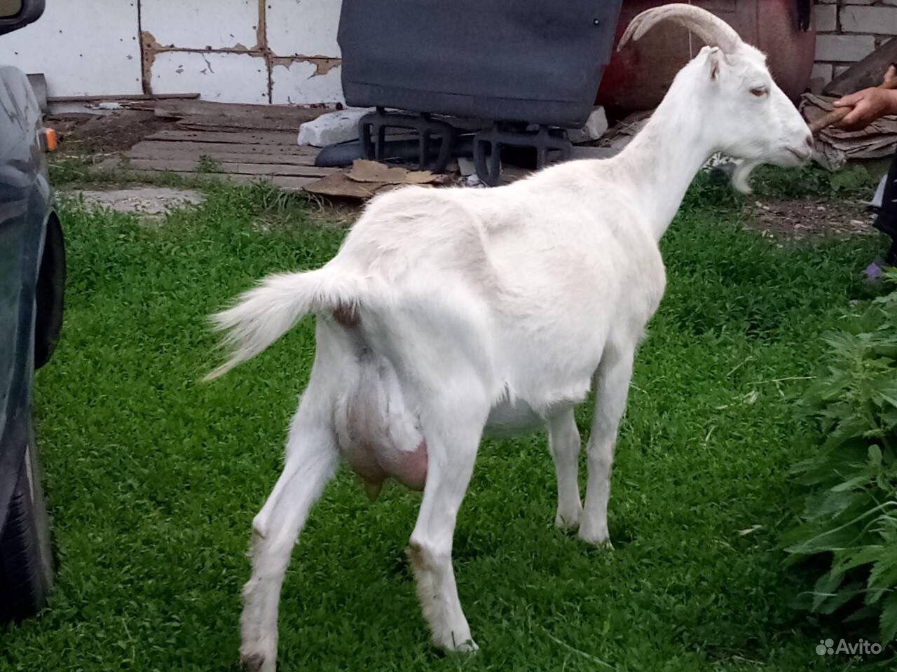 оттягивает черные катрин кози в красном селе онлайн как