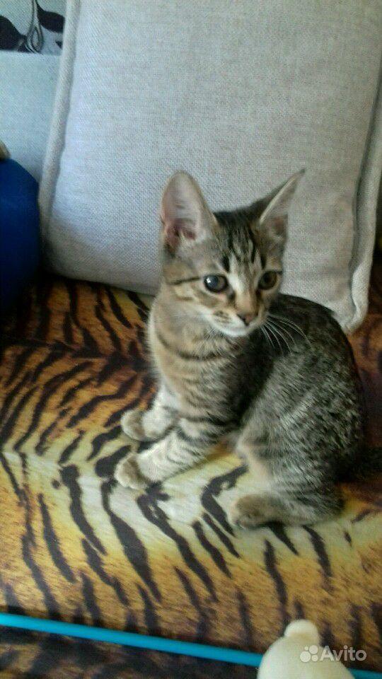 Котёнок - фотография № 1