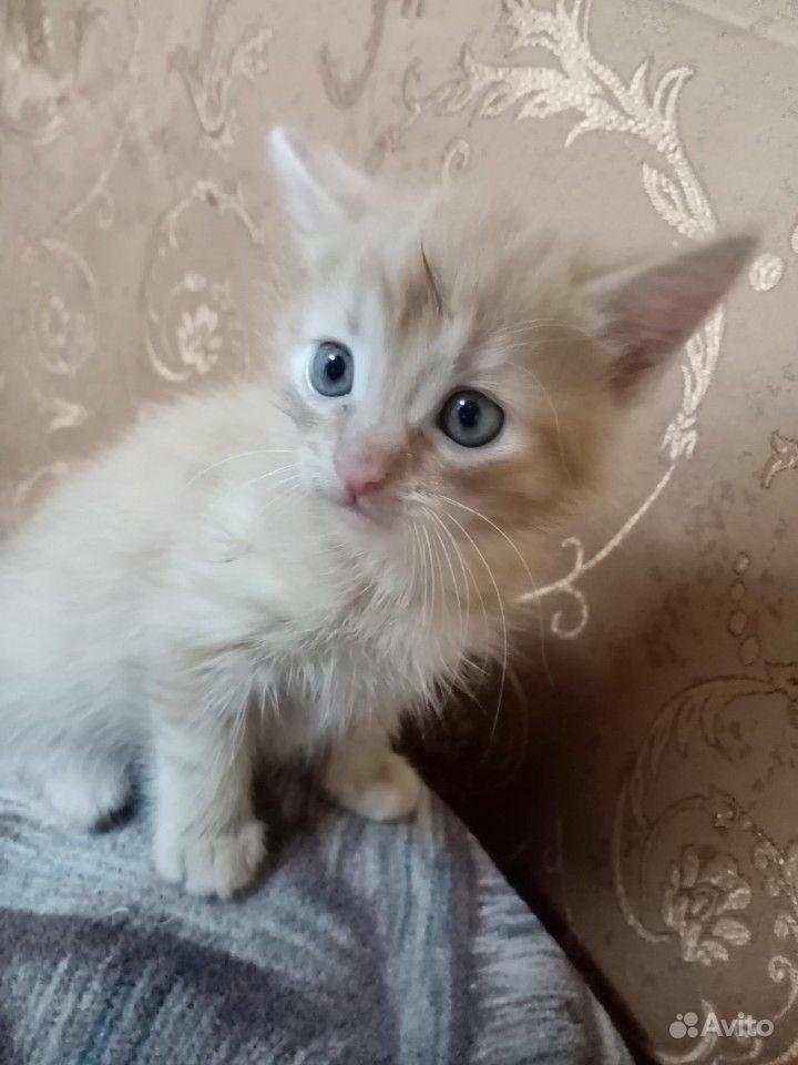 Котенок, девочка