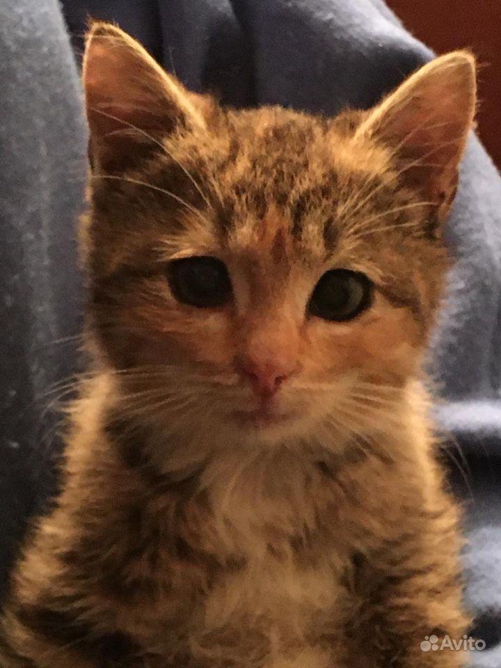Котёнок-девочка в дар - фотография № 3