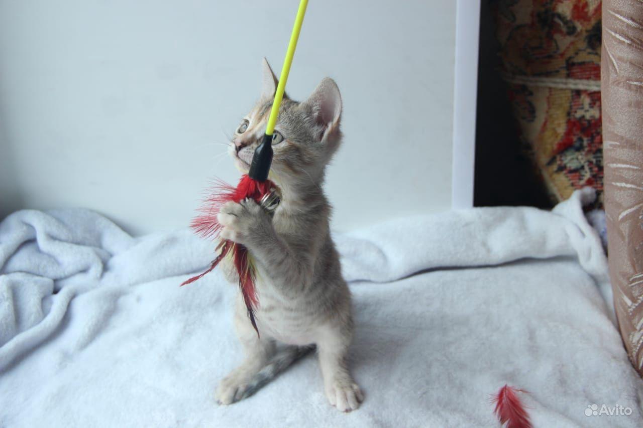 Котёнок - фотография № 4