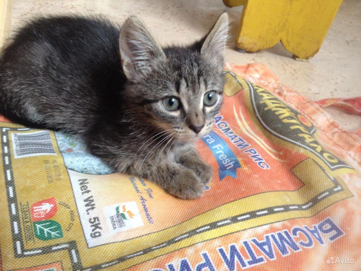 котята в добрые руки картинка надпись печатает мой
