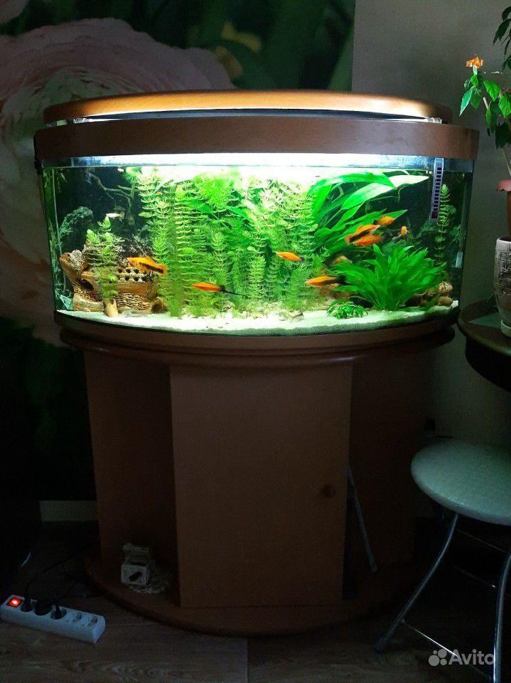 Аквариум с рыбками и тумбой купить на Зозу.ру - фотография № 4