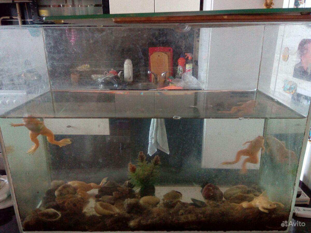 Аквариум со шпорцевыми лягушками купить на Зозу.ру - фотография № 5