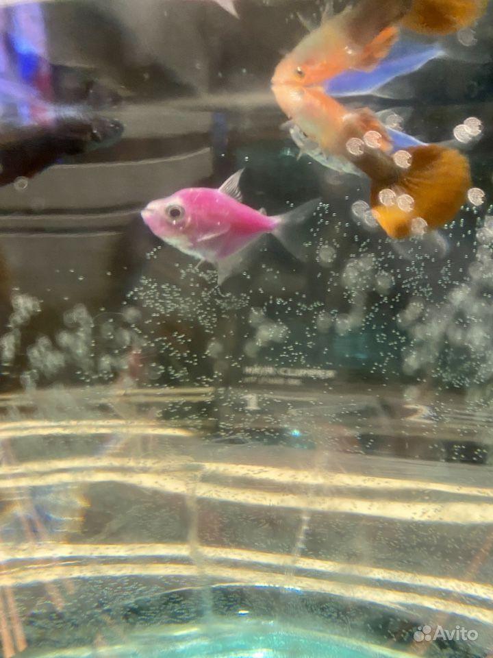 Аквариум с рыбками купить на Зозу.ру - фотография № 6