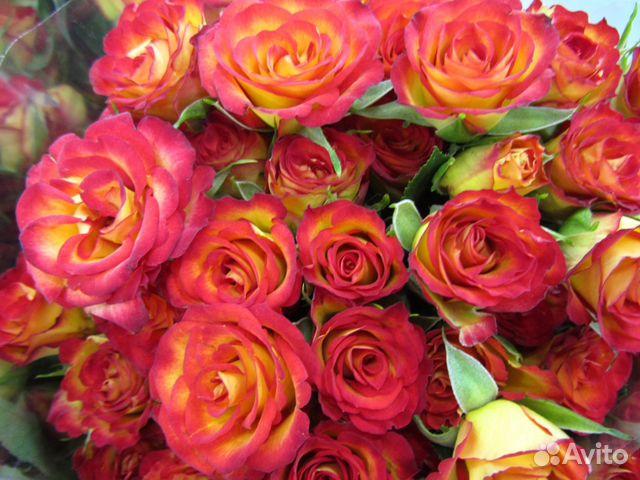 Цветы мелким оптом купить в спб минск цветы с доставкой недорого