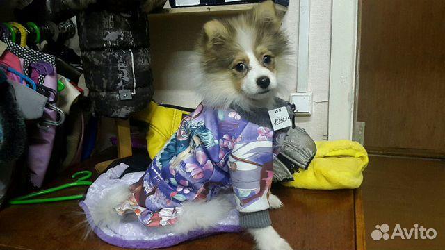 Груминг собак тюмень