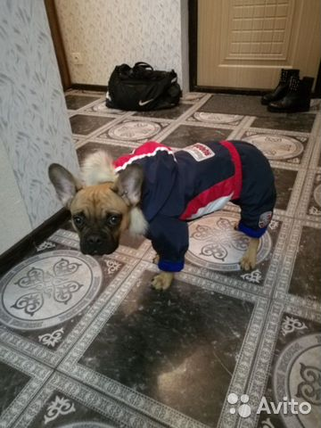 Clothing for dogs 89807241402 buy 4