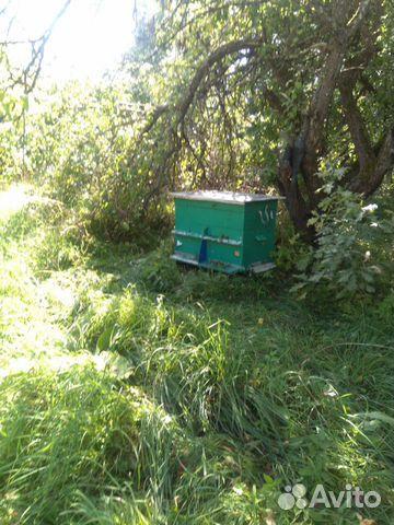 Пчелы с домиками 89082811313 купить 3