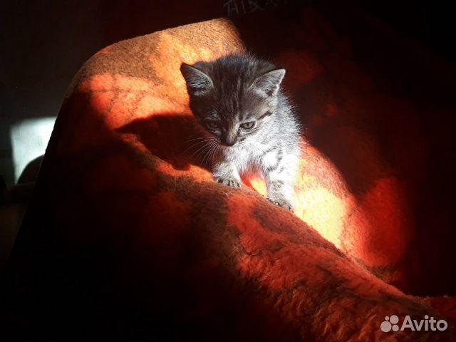 Милые котята ищут родителей  89992093964 купить 3