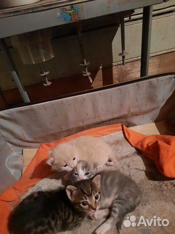 Отдам симпатичных котят  89049272610 купить 1