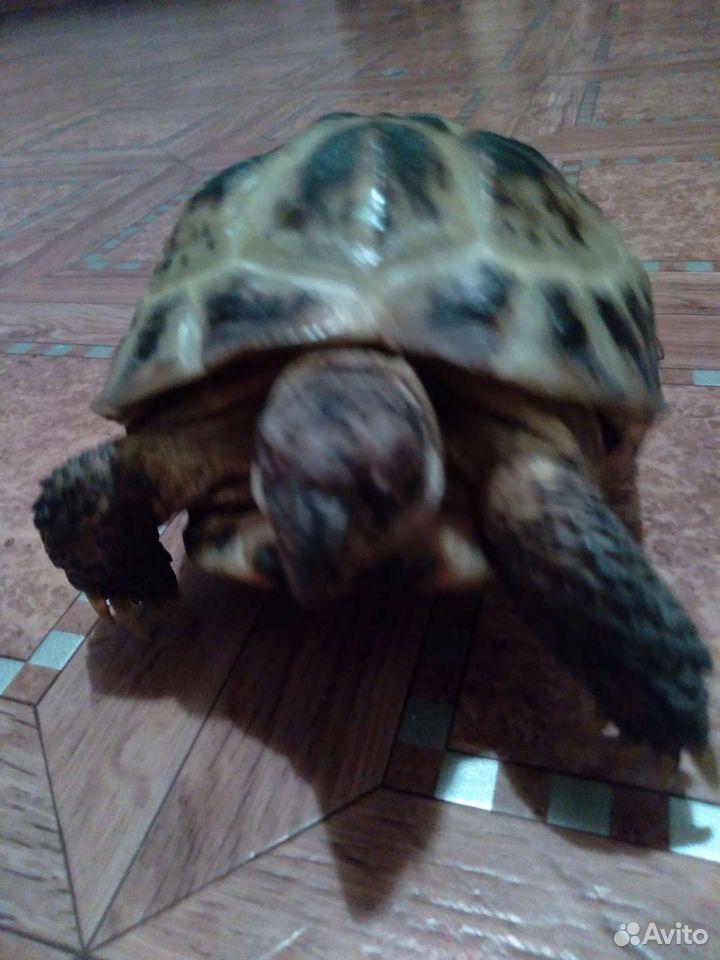 Turtle mark  89235003060 köp 2