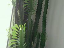 Эхмея,фиалки и другие комнатные растения — Растения в Екатеринбурге