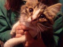 Отдам котенка(кота) в добрые руки