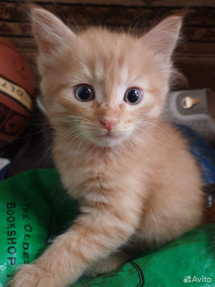 Кошка  89876768416 купить 3