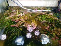 Аквариумные растения, креветки, молинезии мальки
