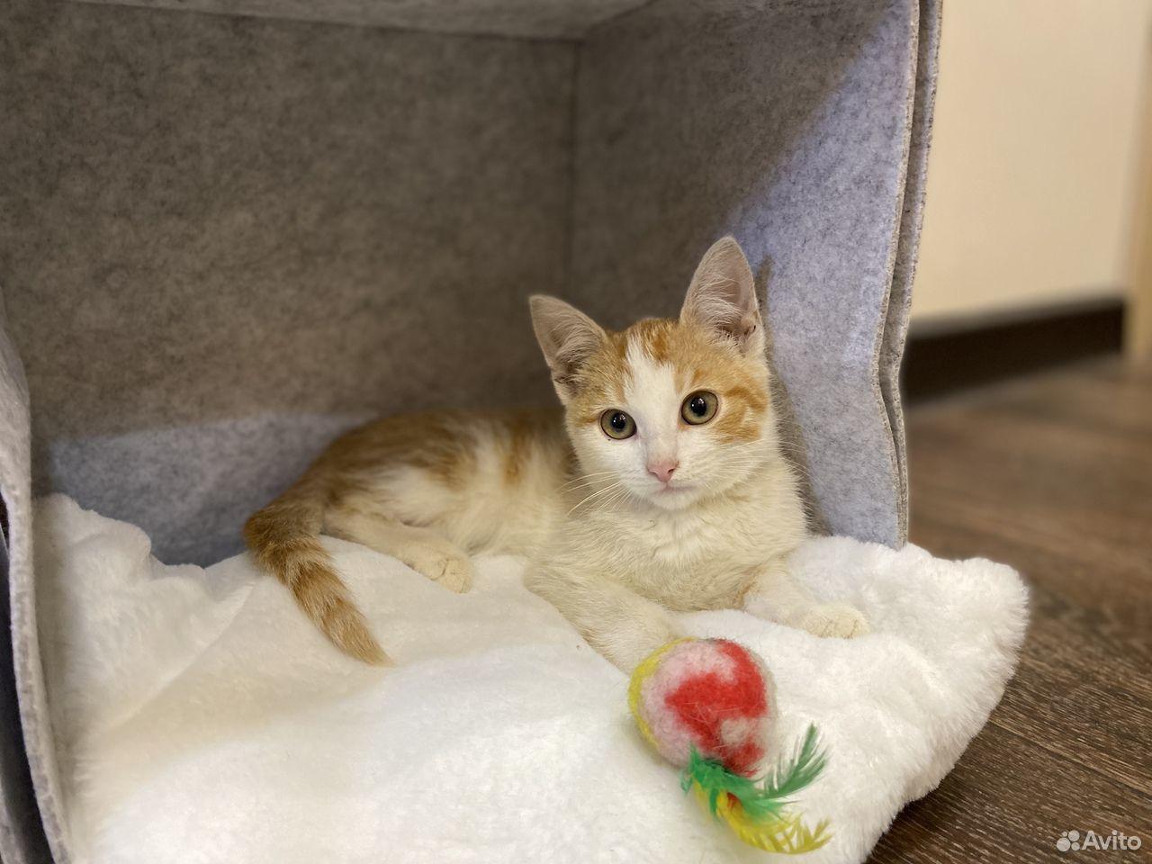 Котенок Пирожок ищет дом  89105364195 купить 1