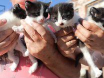 Котики-мальчики рожденные 15.05.2019