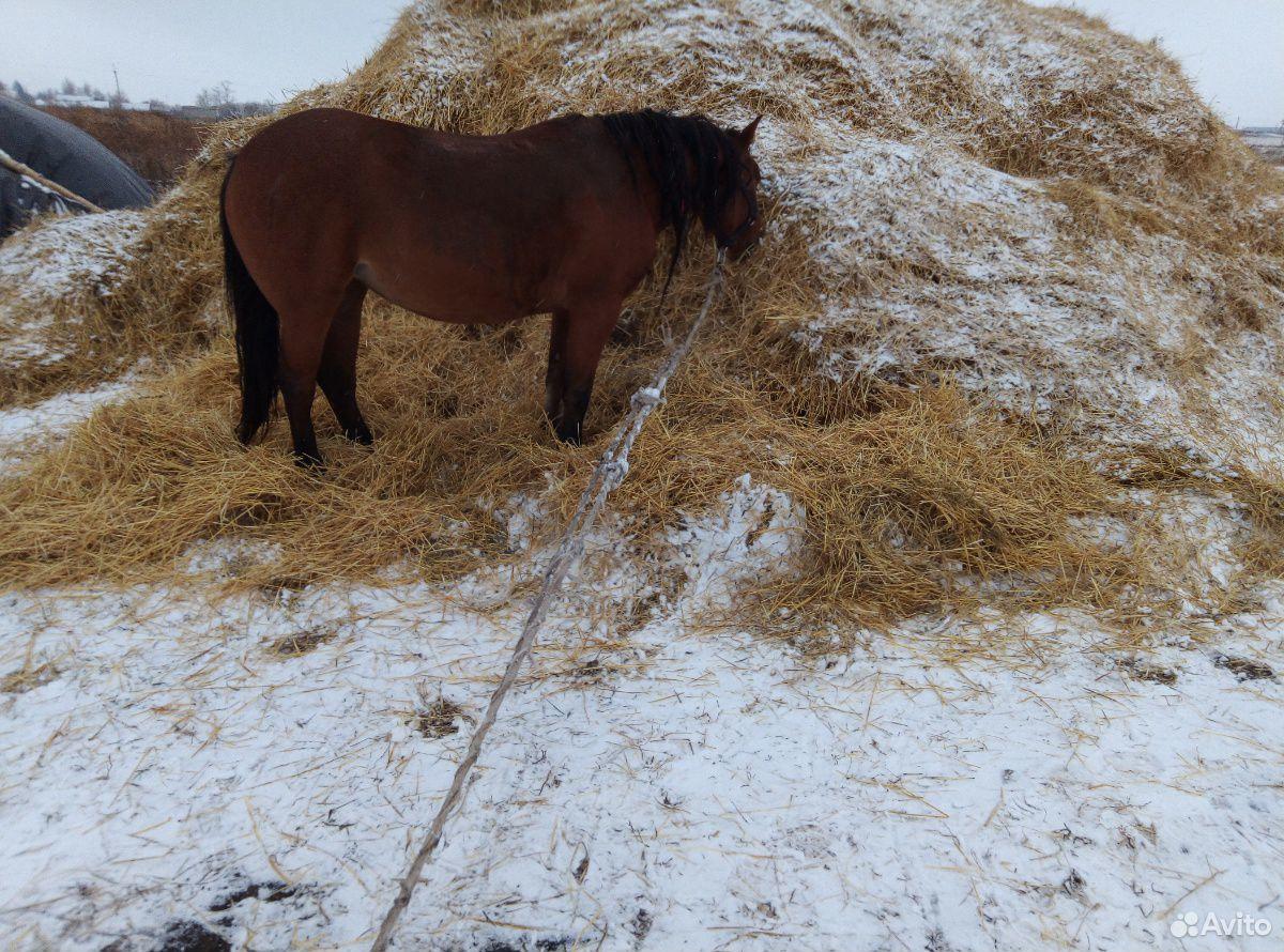 Лошадь  89236928993 купить 7