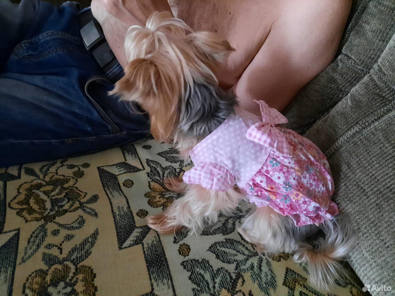 Платье для маленькой собаки размер s  89677666088 купить 6