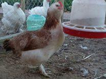 Птичий дом. Цыплята. Гусята. Инкубационное яйцо