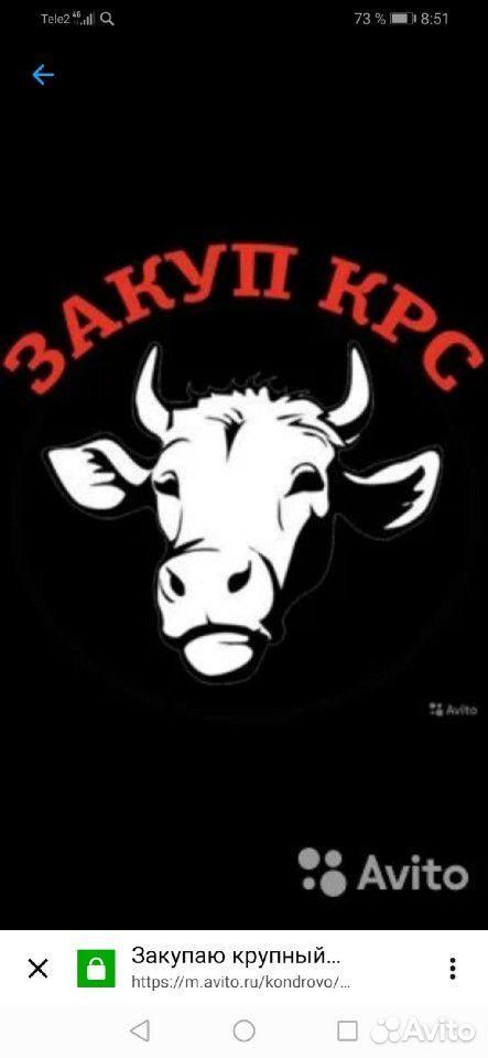 Коровы телята быки телки лошади  89156369284 купить 1
