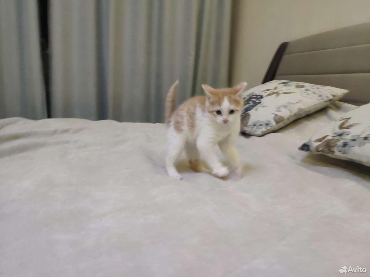 Кошка  89132463030 купить 3